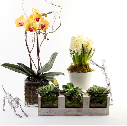 evantine design potted orchids
